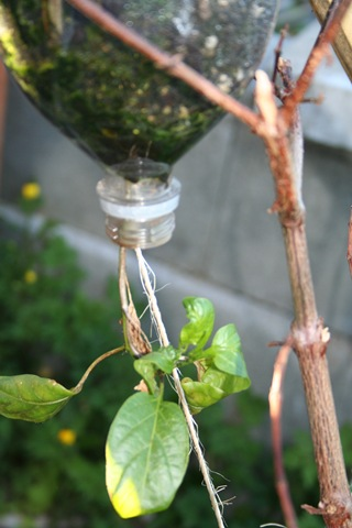 Make Your Own Upside Down Tomato Planter