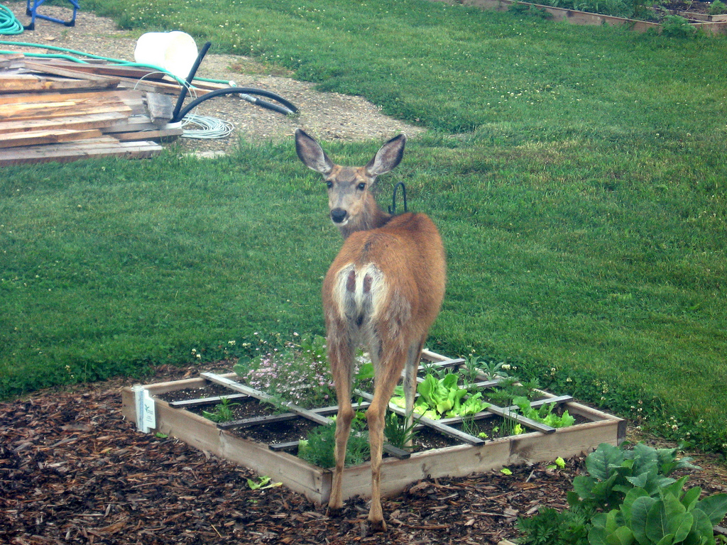 How to keep deer out of your garden for How to keep rabbits out of garden without a fence