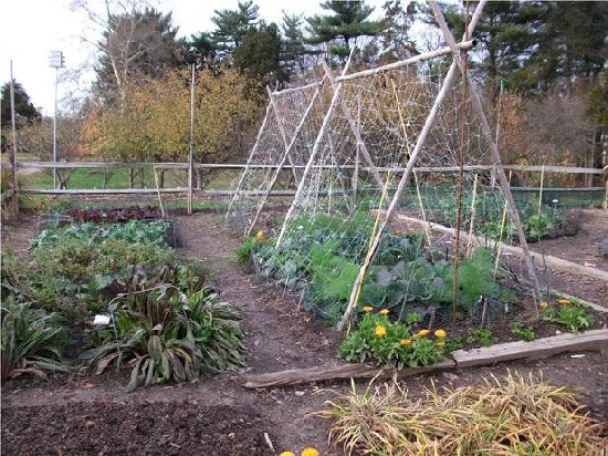 growing a garden great for the environment and the budget Community garden project proposal take part in organic growing, learn about environmental sustainability furthermore, the environment receives a great.
