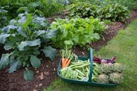 Create Your Own Organic Kitchen Garden In 2013