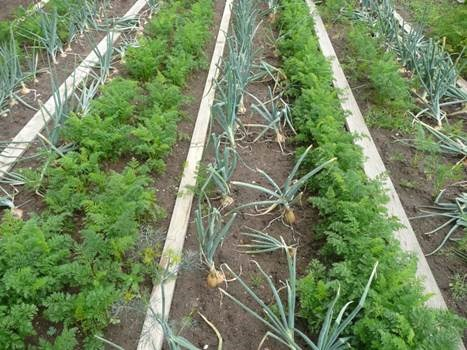 How to prepare your vegetable garden for a harsh winter - Prepare vegetable garden for winter ...